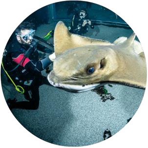 Diving with sharks 6